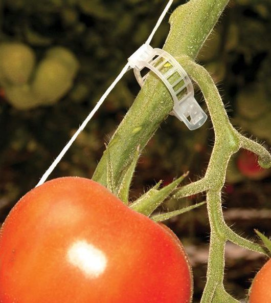 Clip para entutorar Tomate y Pepino.